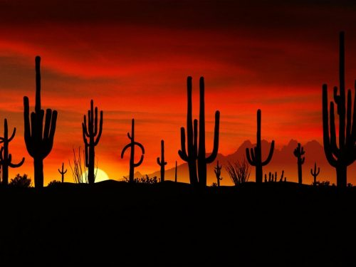 Sonoran Desert Sunset protect environmental law Advocates for the Wes