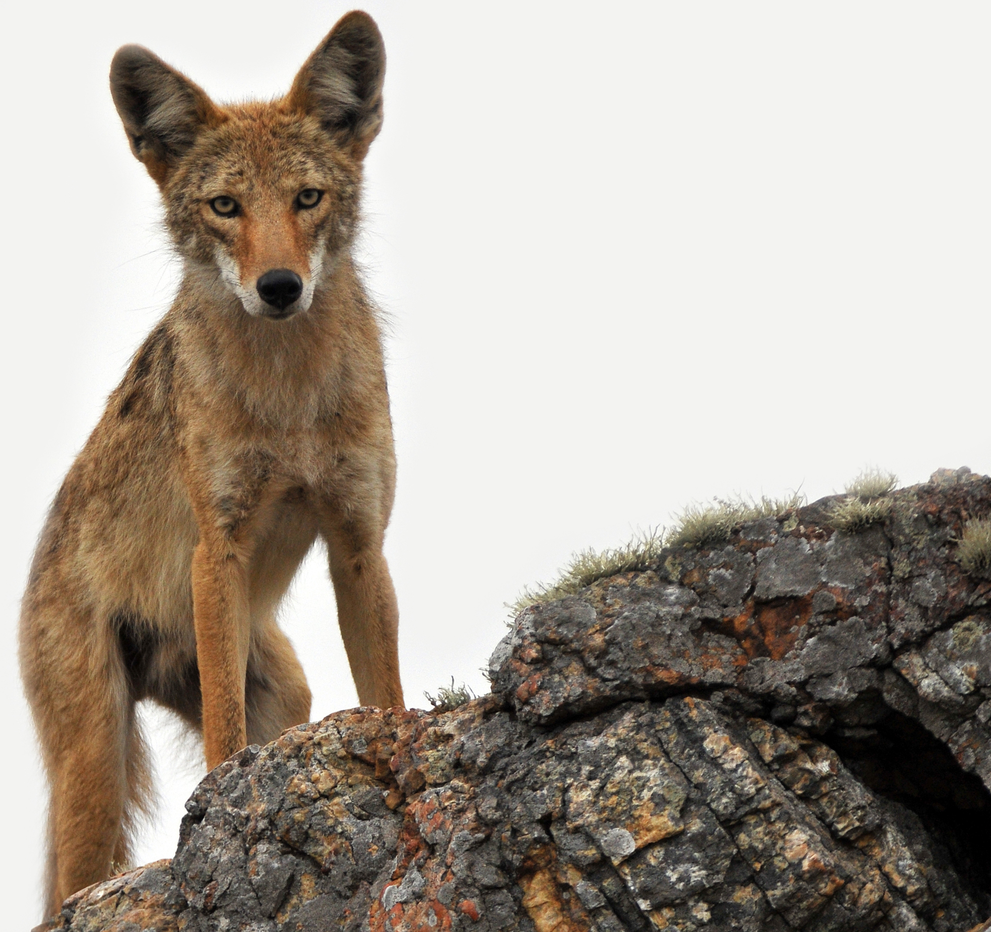 Challenging Wildlife Killing Program in Idaho