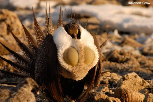 Sheeprocks Sage-Grouse Appeal