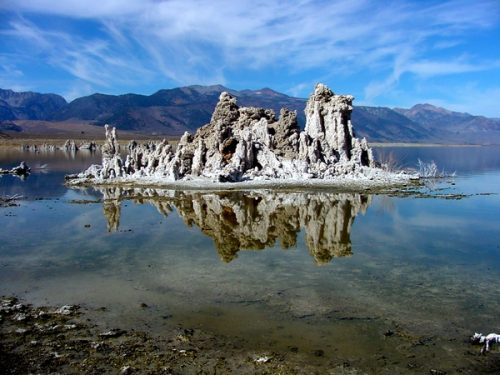 Mono Basin Sage-Grouse