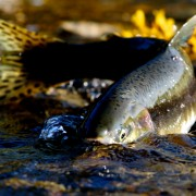 Idaho Water Quality: Fish Consumption Rate