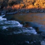 Rio Grande silvery minnow